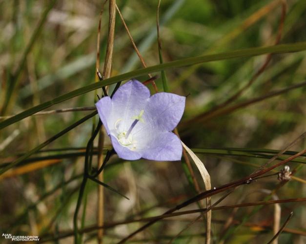 flower31