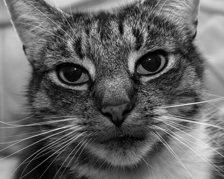 cat2014-12-28-2