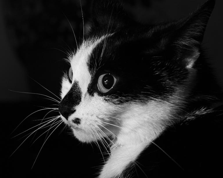 cat-2015-2