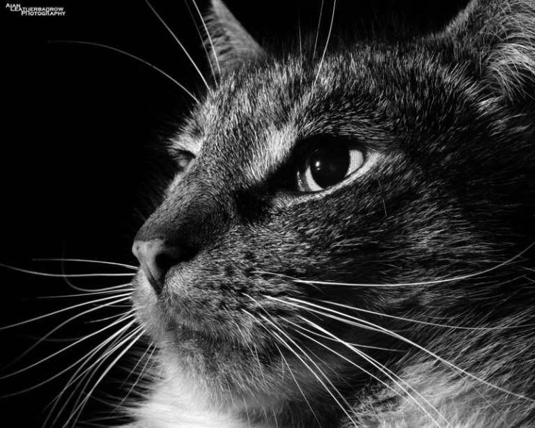 cat310115