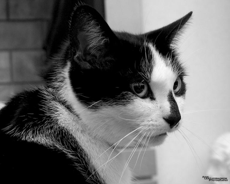 cat020215