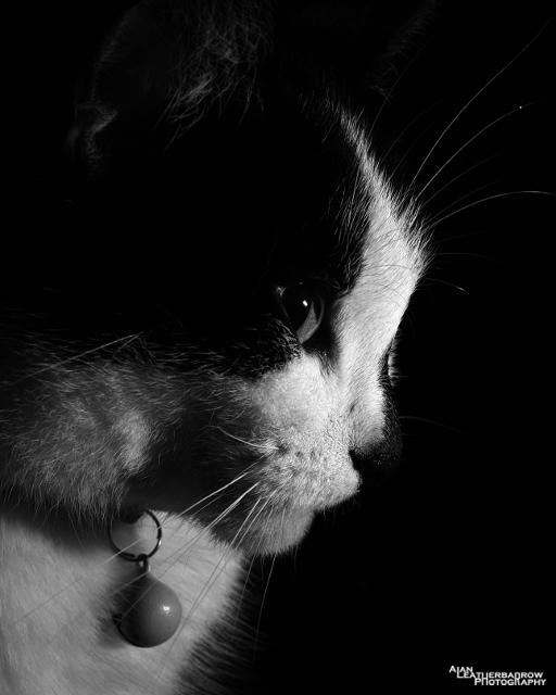 cat020315