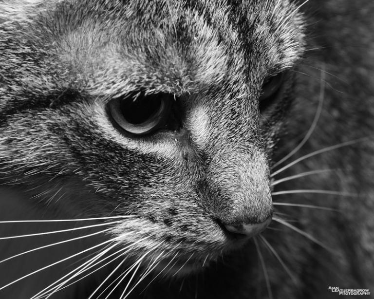cat040215