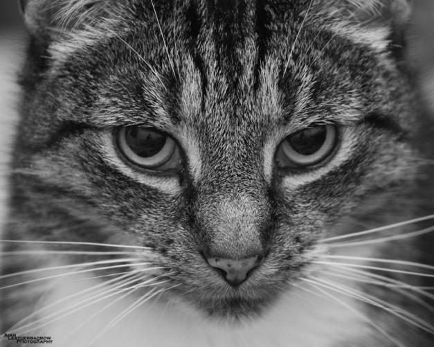cat050215