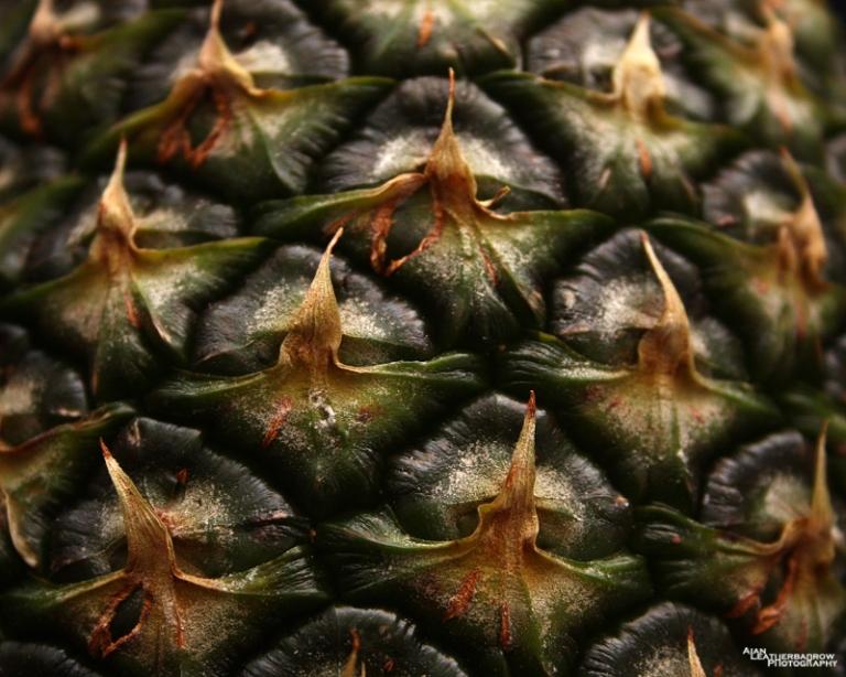 pineapple2015-1