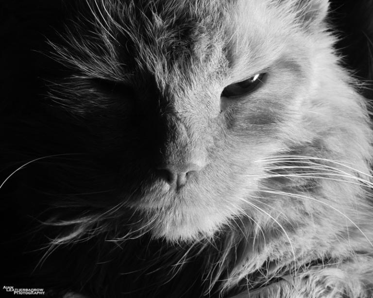scruffycat
