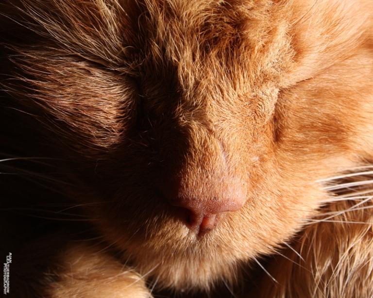 scruffycat2