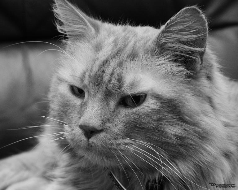 cat0315