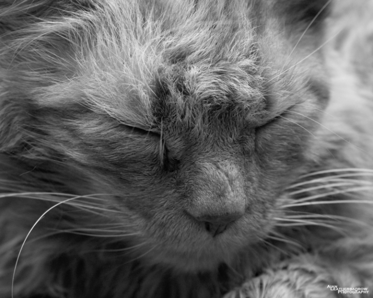 cat03152