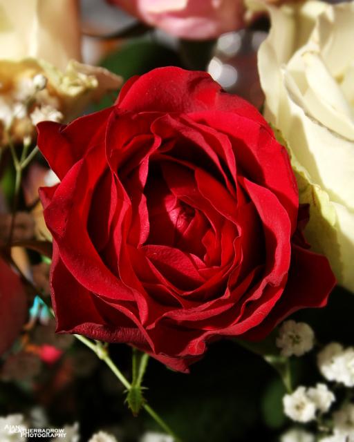 flower030315