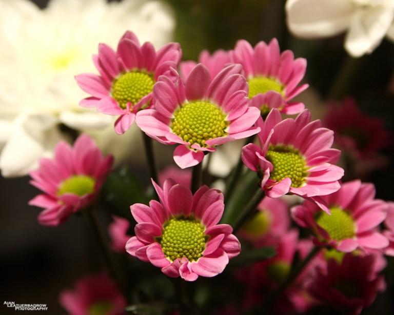 flower140315