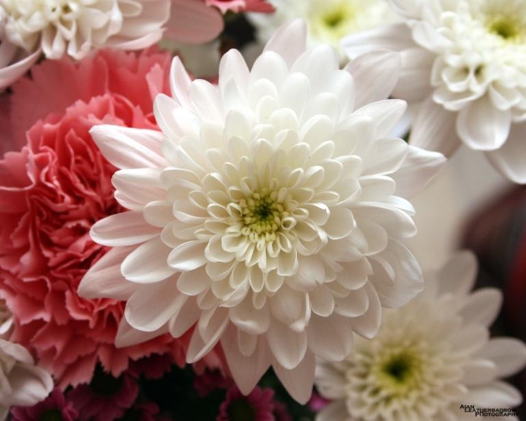flower150315