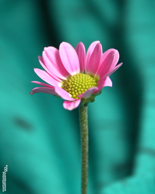 flower19-3-15