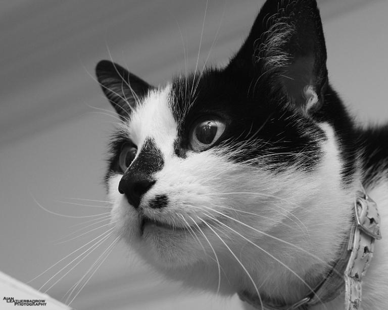 cat04151