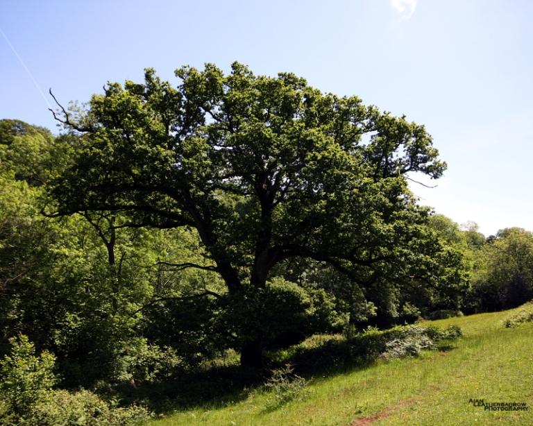 tree0615