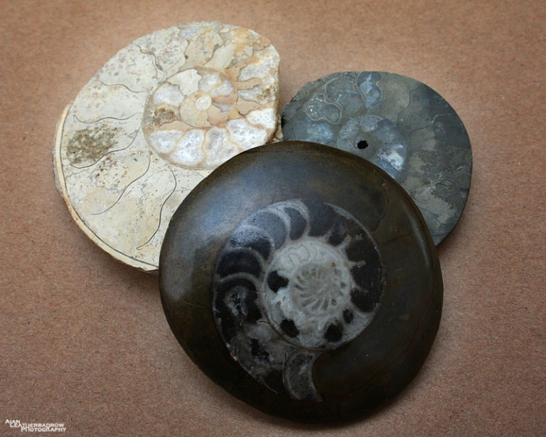 fossils20152