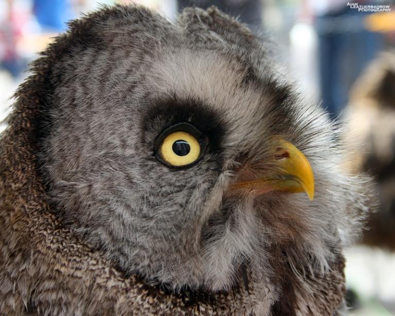 owl300615
