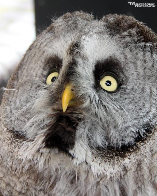 owl3006152