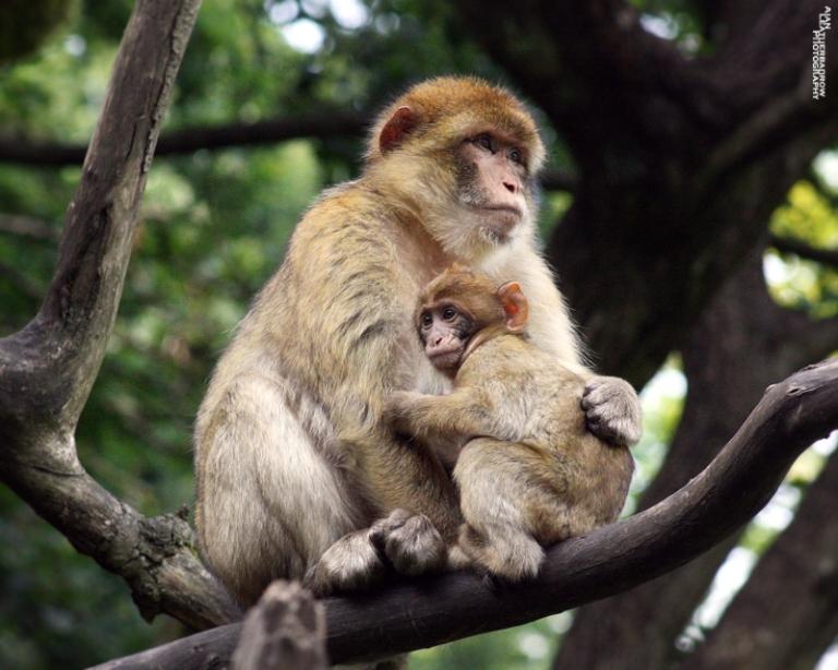 monkey-forest1