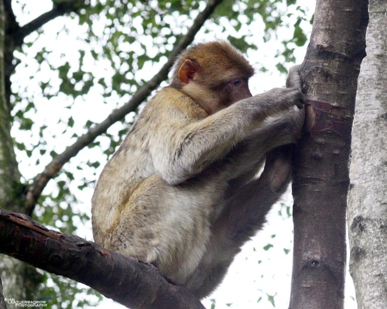 monkey-forest22