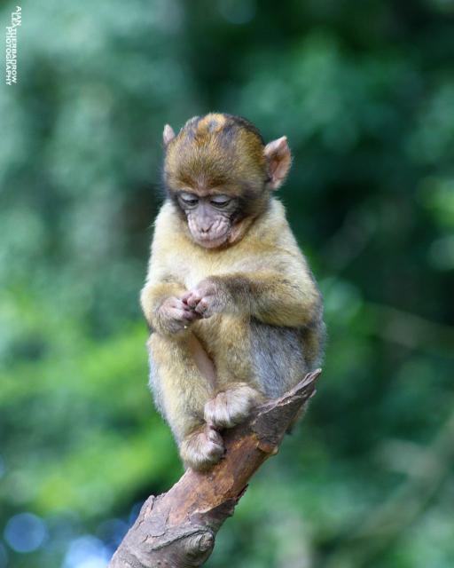 monkey-forest23