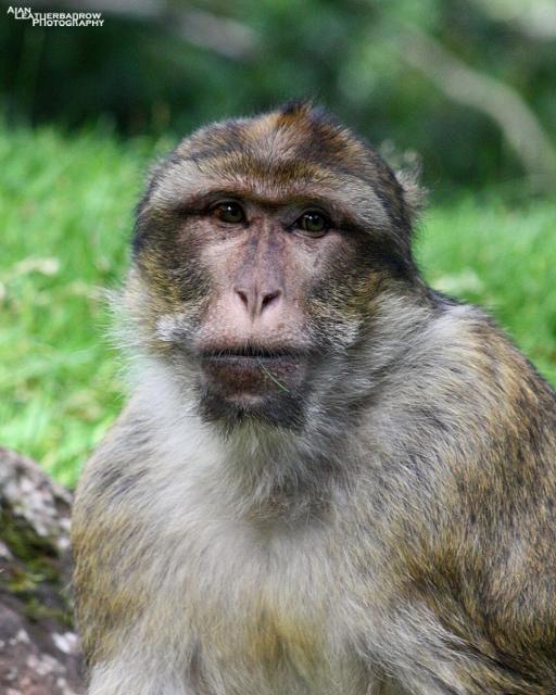 monkey-forest24