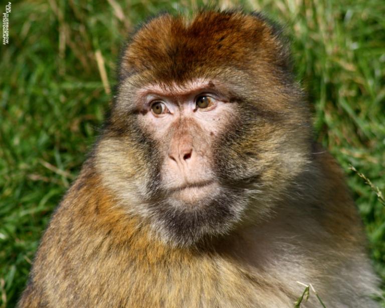 monkey-forest4