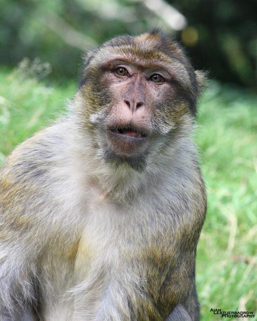 monkey-forest5