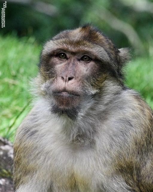 monkey-forest28