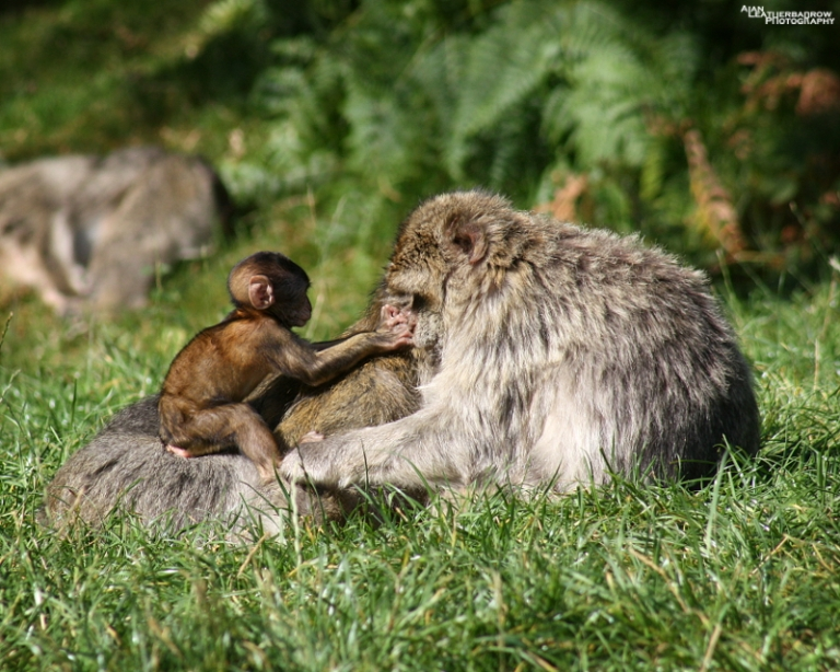 monkey-forest29