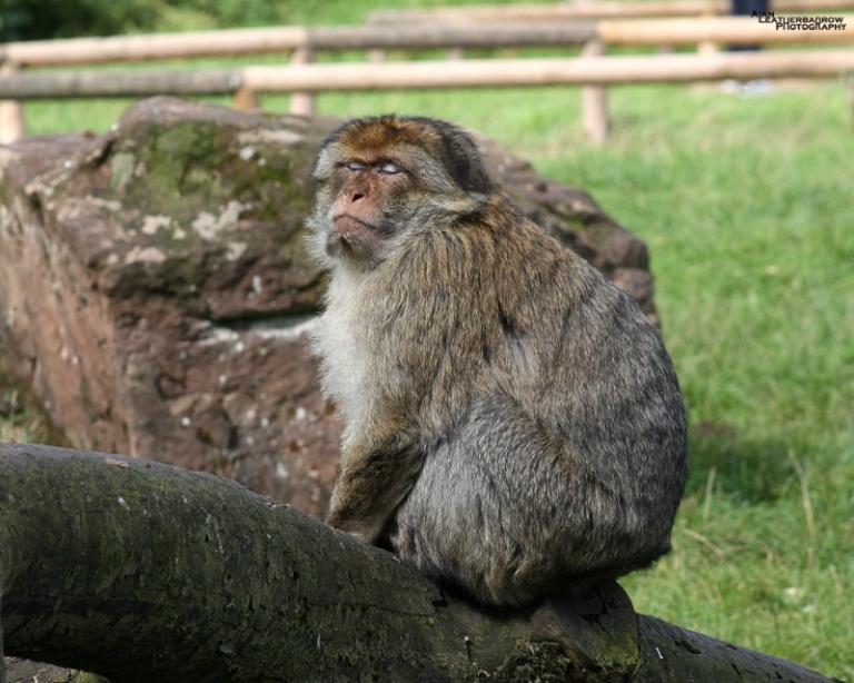 monkey-forest31