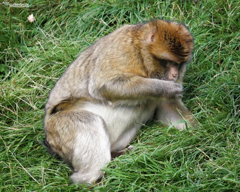 monkey-forest36