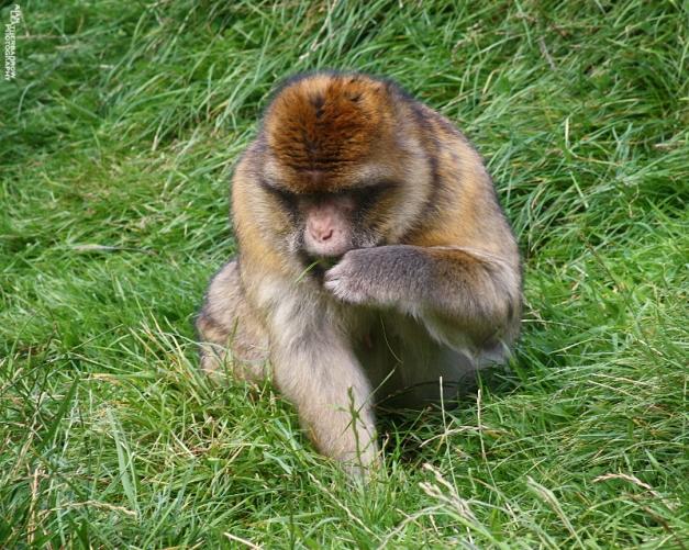 monkey-forest37