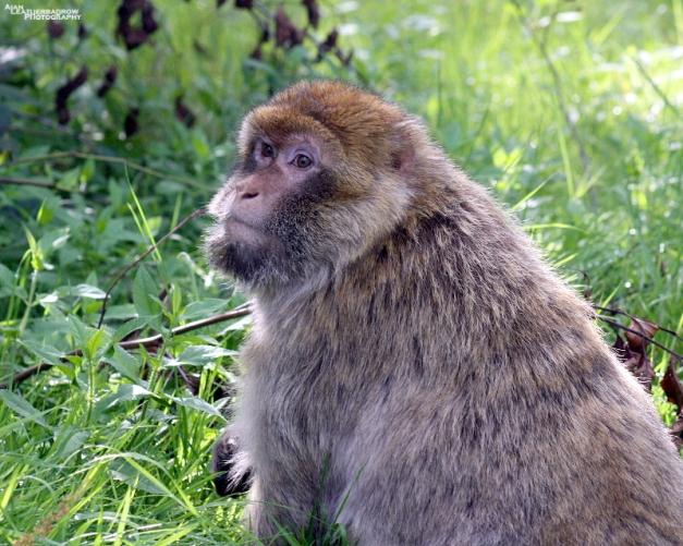 monkey-forest38