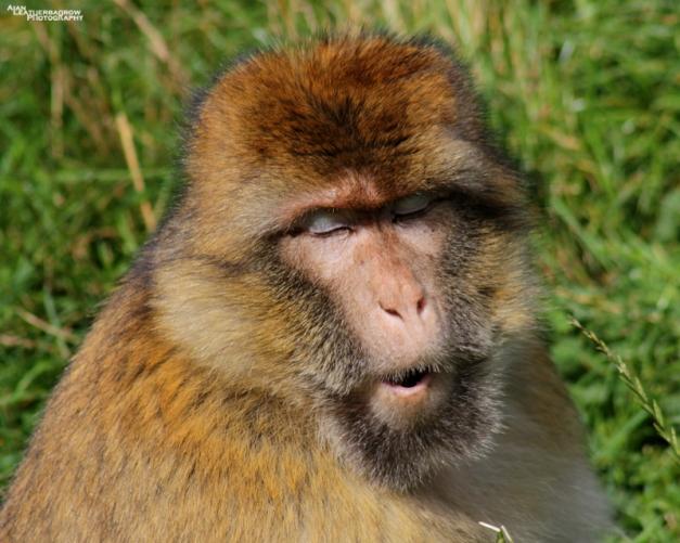 monkey-forest40