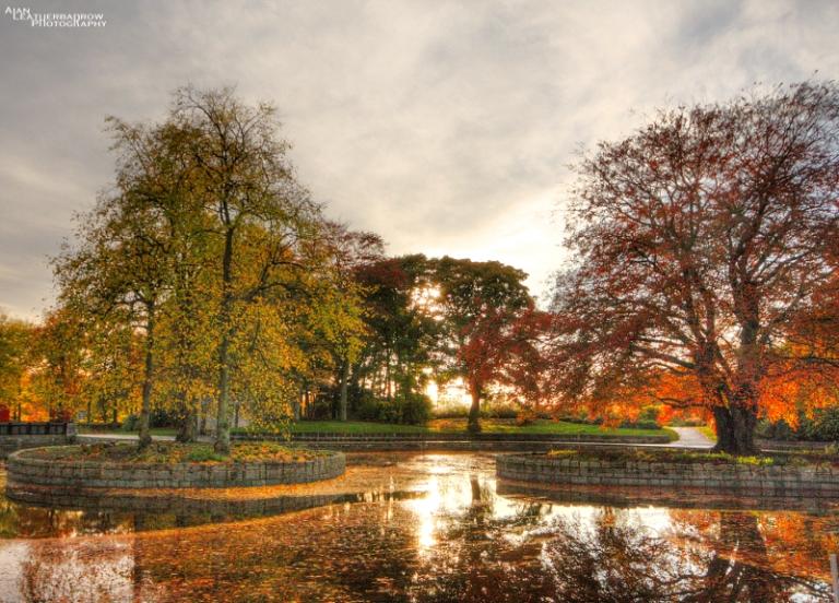 autumn-trees2