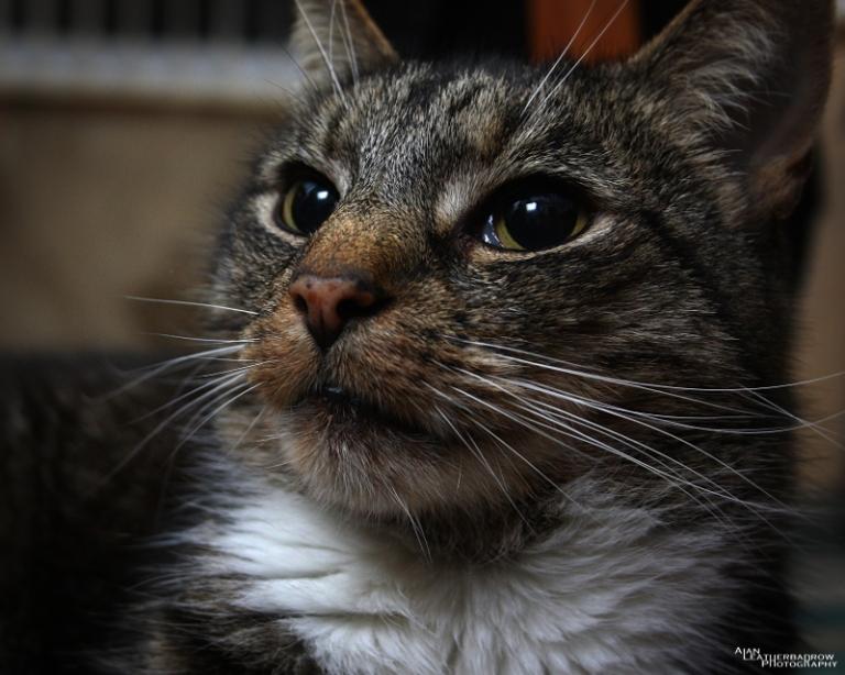 cat011601