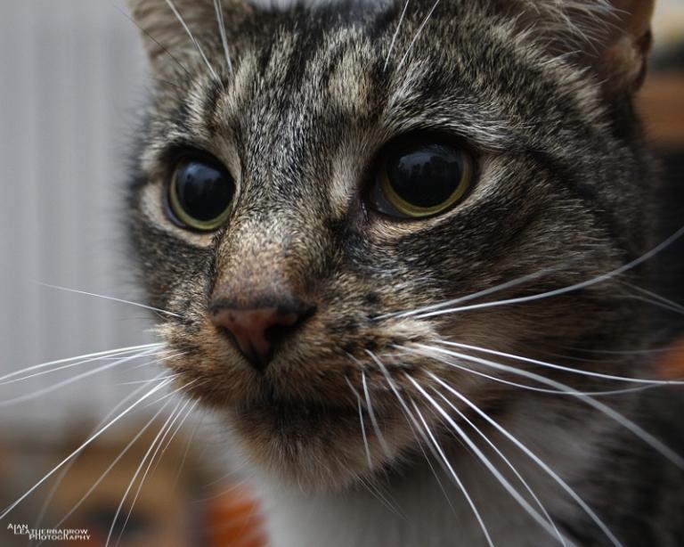 cat011602