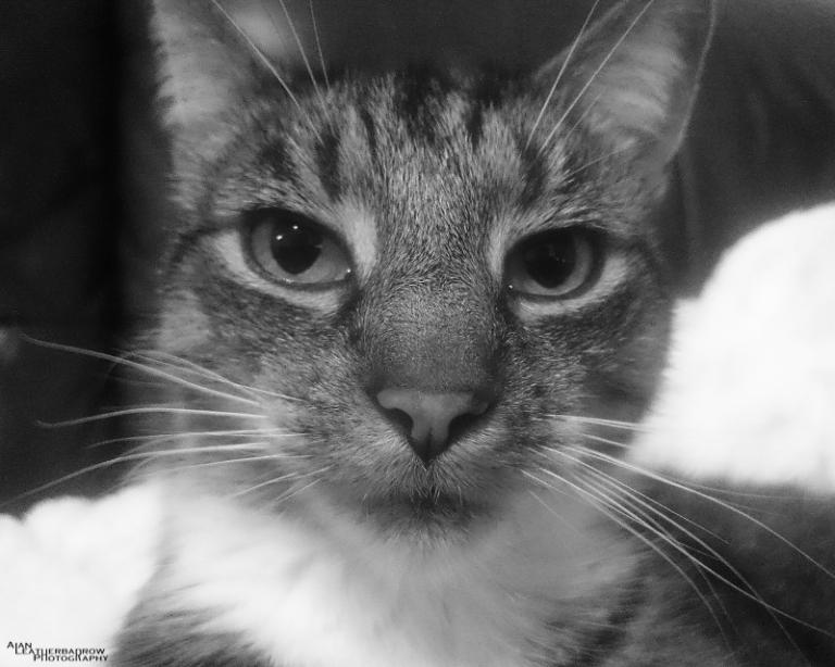 cat011604