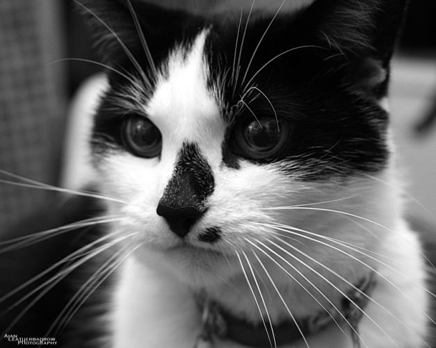 cat011605