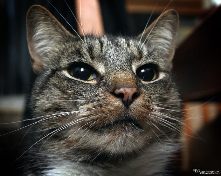 cat011606