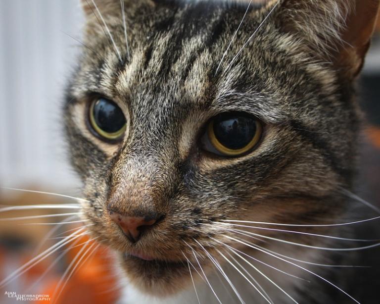 cat011607