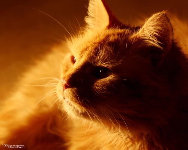 cat011608