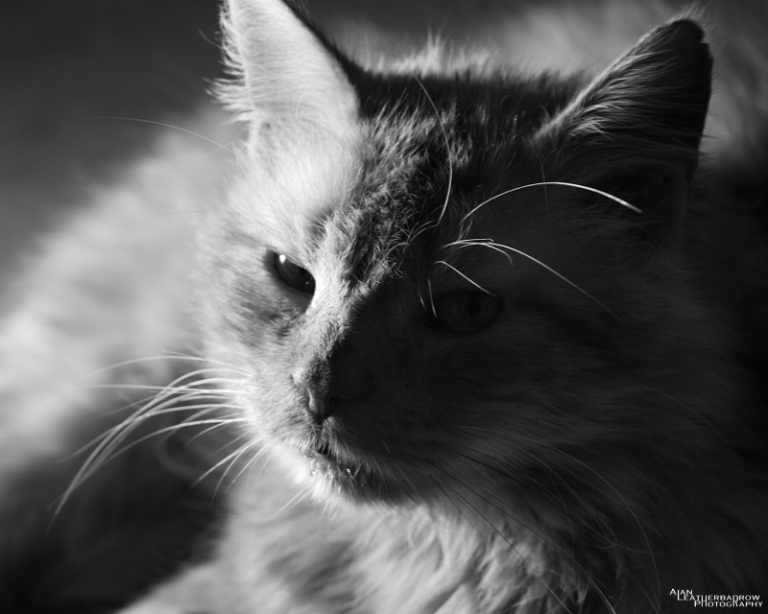 cat011609