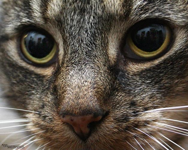 cat011610
