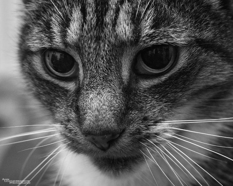 cat011611