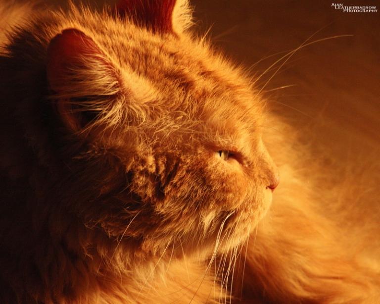 cat011612