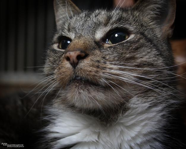cat011614