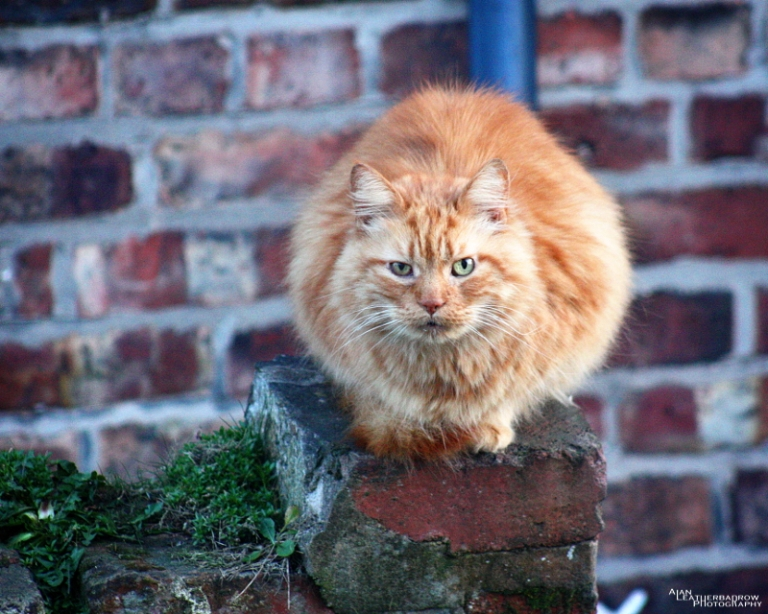 cat230301