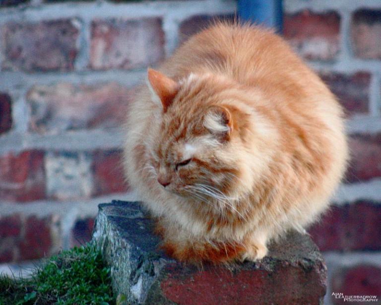 cat230302